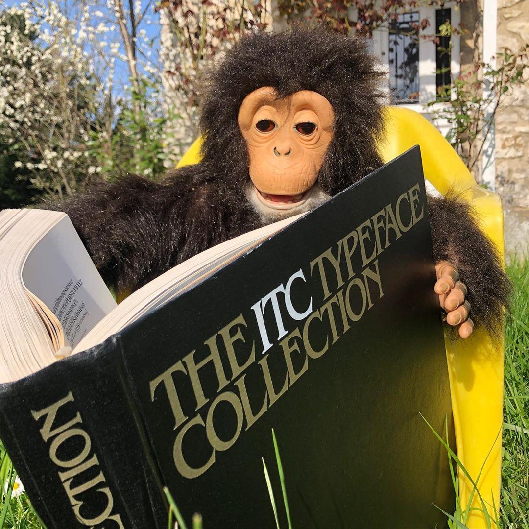 But wait, what is that monkey reading??? #wtfont #hahamonkey