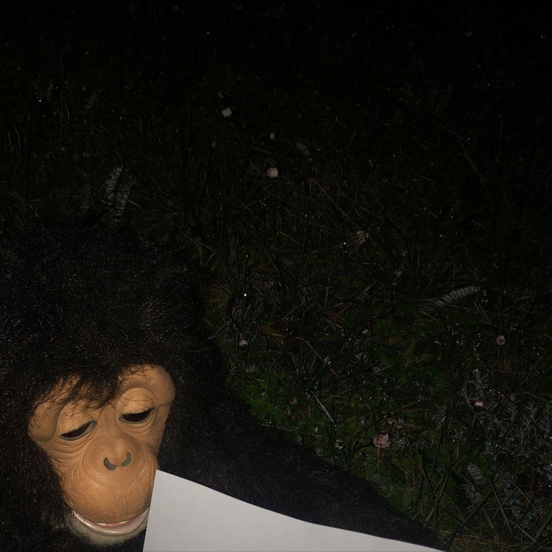 *Blank paper at night, monkey's delight*  #justsaying #hahamonkey