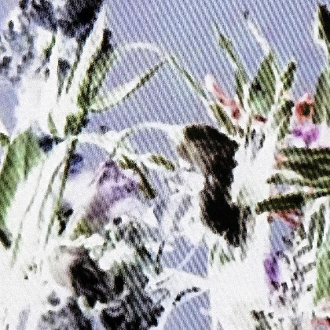 deu_bouquet_lcd_acidcrop.png